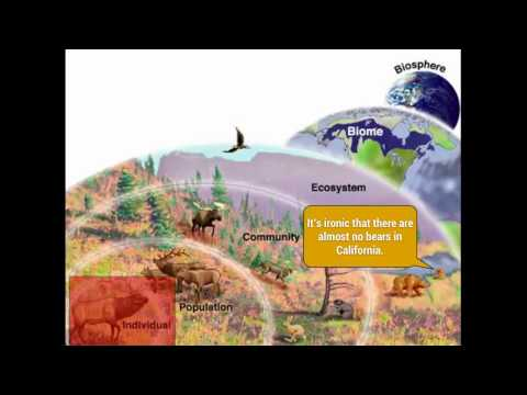 Ecology: Levels of Organization (Organisms, Communities, Biomes, biosphere)