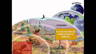 Ecology: Levels of Organization (Organisms, Communities, Biomes, biosphere) thumbnail