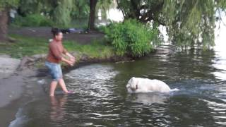White Swiss shepherd, БШО - Джульбарс - купание белой собаки