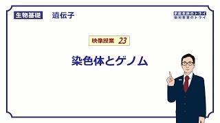 【生物基礎】 遺伝子23 染色体とゲノム (16分)