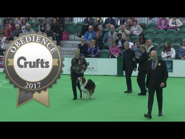 Obedience Championship - Bitches - Part 16 | Crufts 2017