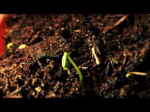 Sowing Calendar - for PC/ Laptop Windows XP, 7, 8/8.1, 10 - 32/64 bit