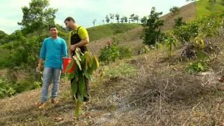Escuela de Campo - Establecimiento de un cultivo de Cacao - Mayo 14 de 2013