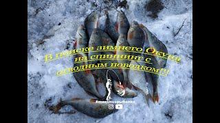 В поиске зимнего Окуня на спиннинг с отводным поводком!!! #maximusрыбалка
