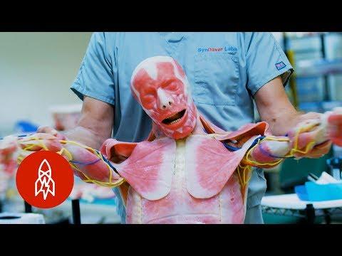 Westworld' IRL: Creating Lifelike Synthetic Human Cadavers