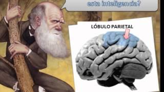 Inteligencia Logico Matematica