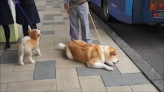 秋田県大館市が忠犬ハチ公のふるさとであることにちなみ、毎月8が付く日...