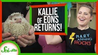 Ammonite Fossils and Sharp Animals w/Kallie from PBS Eons | SciShow Talk Show
