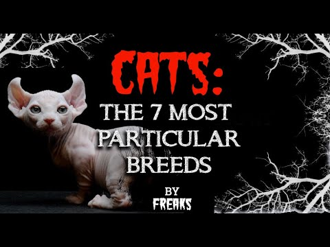 CATS: THE 7 MOST PARTICULAR and FREAKY BREEDS