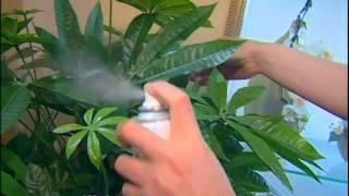 видео Зеленый офис - Фитодизайн, озеленение, кашпо и вазоны для комнатных растений