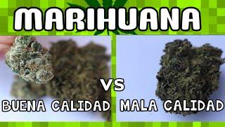 MARIHUANA BUENA CALIDAD VS MALA CALIDAD