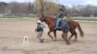 Equine Therapy with U.S. Combat Veterans