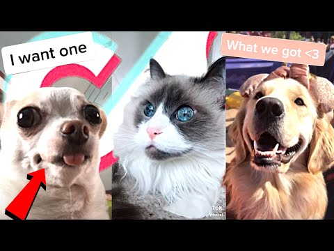 August 2020 Funny Cute Tik Tok Animals Compilation(Pt.11)