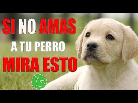 ¿sabes-porquÉ-proteges-y-amas-a-tu-cachorro?-(tienes-que-verlo)