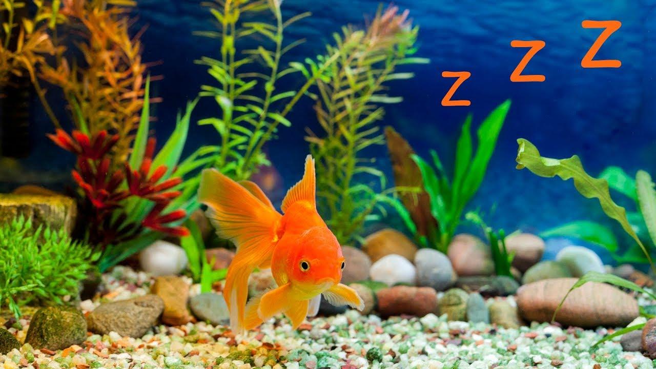 schlaflieder f r kinder und aquarium baby einschlafmusik youtube. Black Bedroom Furniture Sets. Home Design Ideas
