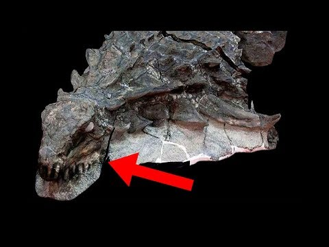 Most UNBELIEVABLE Dinosaur Fossil Discoveries!