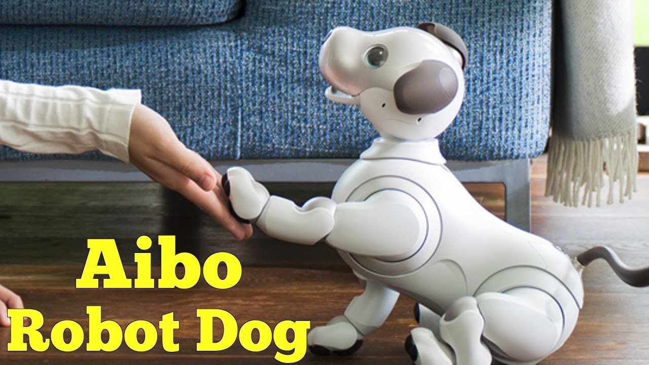 the effects of regular dogs and robotic dogs to people in treatment nursing homes Just love, adding that the dog, won't chew up your slipper while scientific research on the benefits of robotic pets has thus been inconclusive, there seems to be plenty of anecdotal evidence to support the beneficial effects.