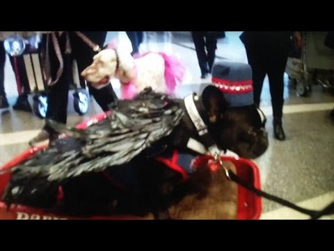 Therapy dogs and handlers Relieve passenger stress and anxiety at LAX
