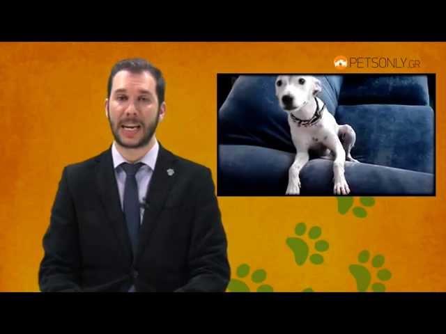 Σκύλος, κυριαρχία και επιθετικότητα. Ποια είναι η αλήθεια; (Μέρος Πρώτο)