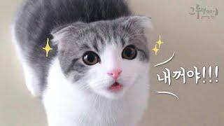 말대꾸하는 먼치킨 고양이 코비 (귀여움주의) talking cat