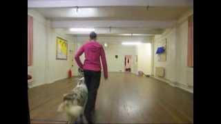 heelwork training & exercises