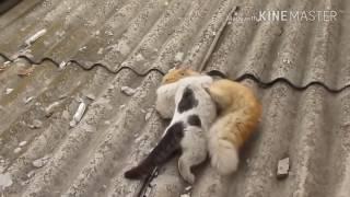 Жестокие бои котов СМОТРЕТЬ ВСЕМ!!!