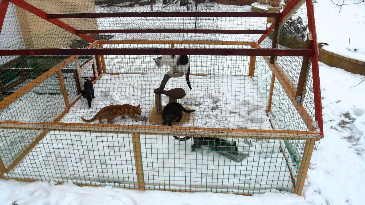 Katzengehege Bauen 7 januar 2016 das katzengehege ist fertig
