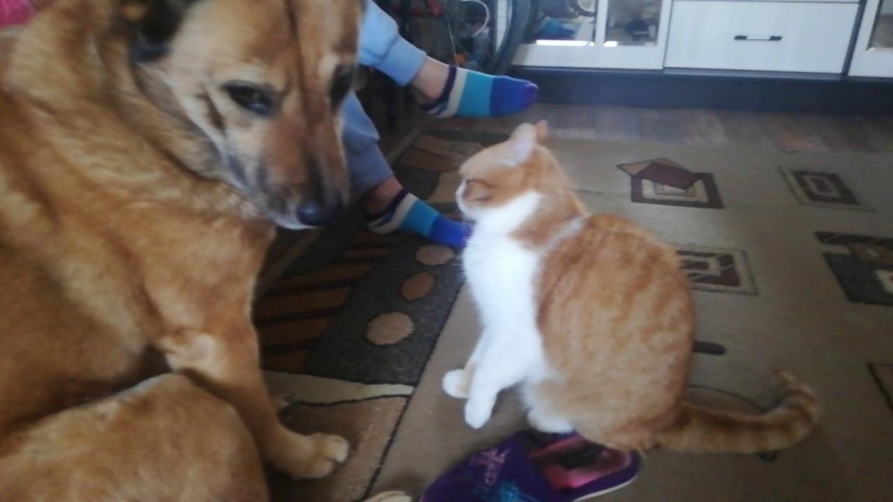 Кот и собака-лучшие друзья. Играют и нежатся :3 - YouTube