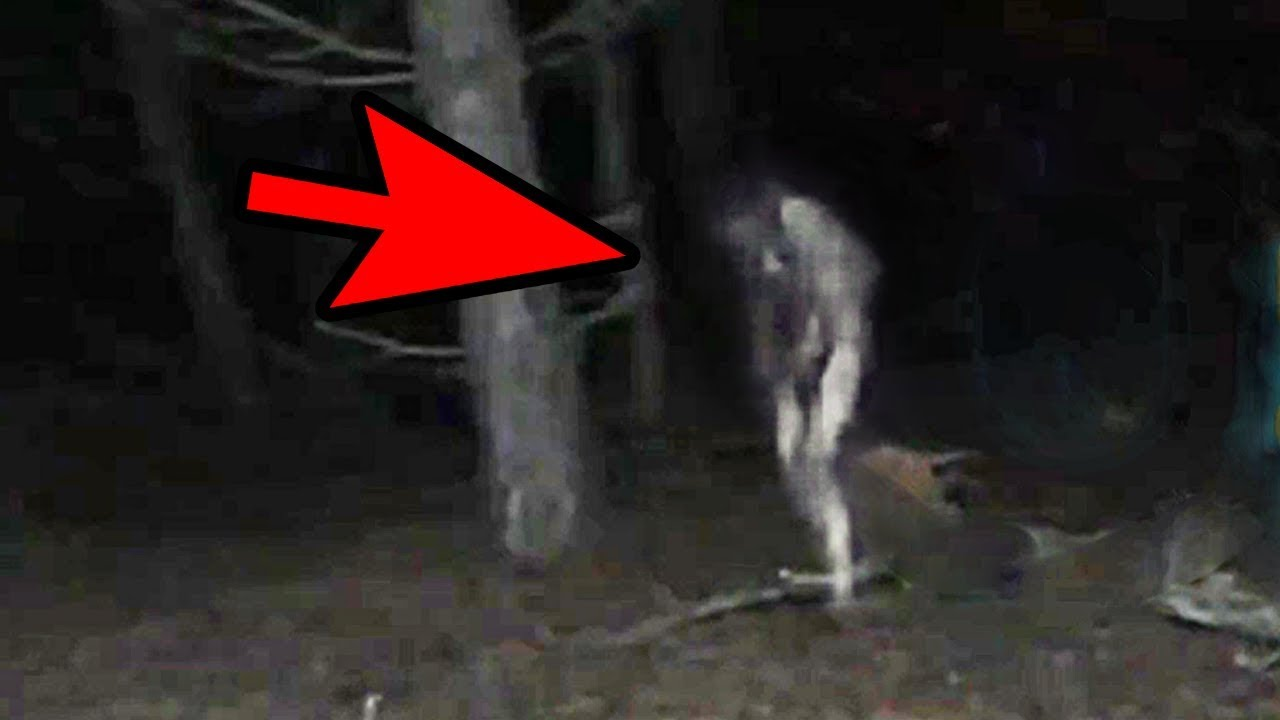Video - 5 Mysterious Creatures Caught On Camera Top 5