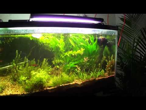 Velvet Disease In The 125 Planted Tank, How I Fixed It.