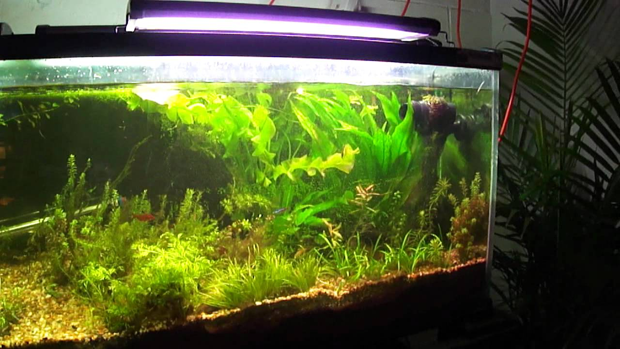 Fish in tank diseases - Velvet Disease In The 125 Planted Tank How I Fixed It Wayne S Fish World