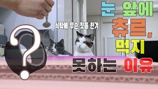 고양이가 부엌·식탁에 올라간다면 이렇게 해보세요