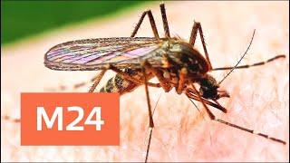 Смотреть видео Москвичи опасаются нашествия комаров - Москва 24 онлайн