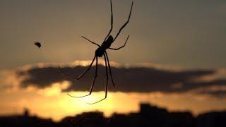 Здоровенный паук в доме !!!