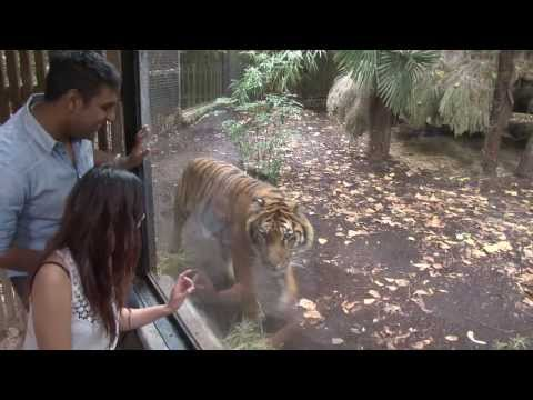Melbourne Zoo   Highlights