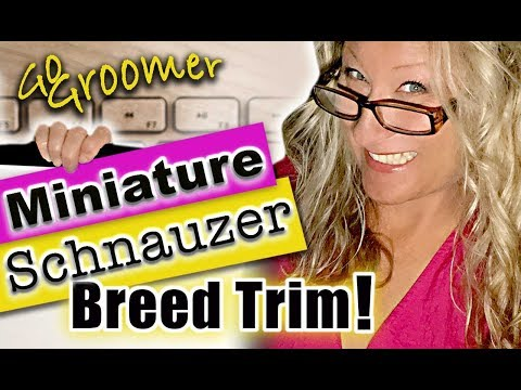 How to Groom a Miniature Schnauzer-Breed Standard Trim