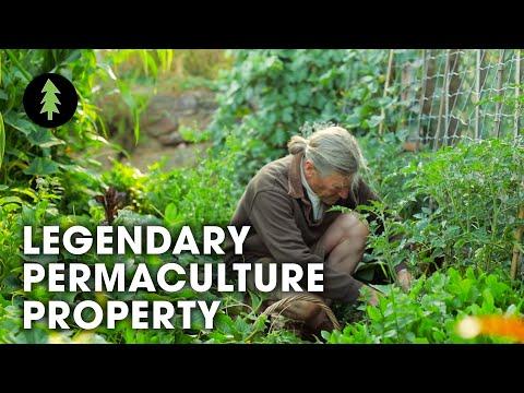 legendary-australian-permaculture-garden-tour-–-david-holmgren-su-dennett-s-melliodora