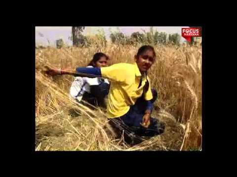 Kaithal football player cut wheat corp