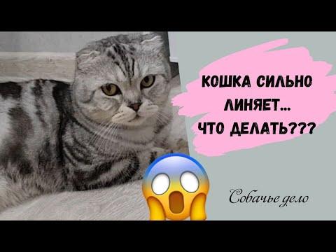 Вопрос: Кошка отрыгивает шерсть, что делать?