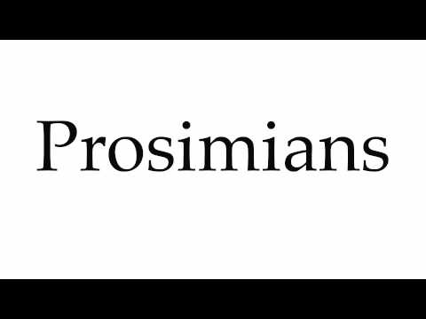 How to Pronounce Prosimians