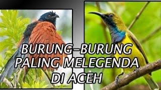 WOW!!! INILAH BURUNG-BURUNG YANG MELEGENDA DI ACEH || IRVAN BASRI