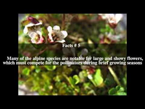 Flora of the Sierra Nevada alpine zone Top # 8 Facts