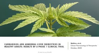 Can CBD use lead to elevated liver enzymes in healthy adults?