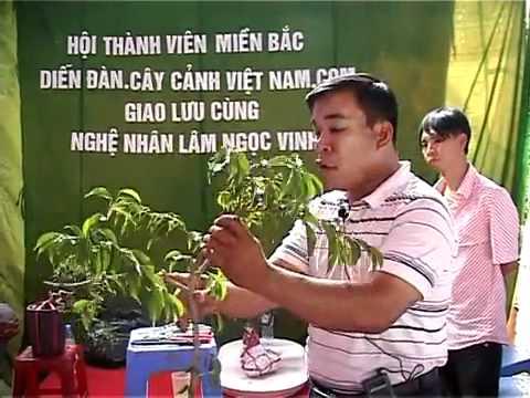 Phan 1   Tao hinh cay Sanh