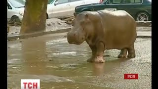 Тбілісі в ніч на неділю накрила повінь, а з зоопарку повтікали дикі звірі