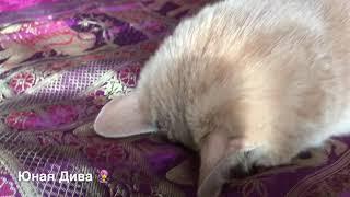 LC422: Женскийклуб. В мире животных. Кот Яшка после гулянки на даче. Приехал...