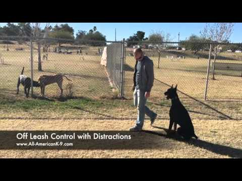 Dog Training for out of Control Doberman