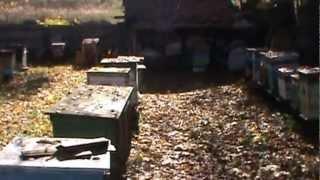 Пчеловодство для начинающих видеоуроки 1
