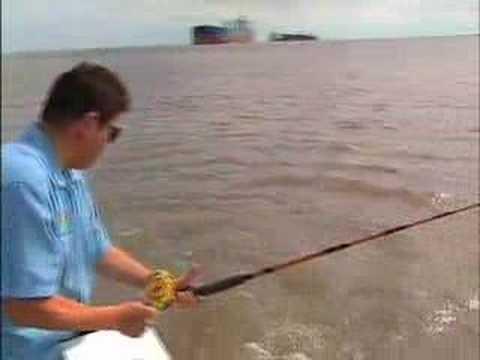 Texas Winter Black Drum Fishing Giant Fish