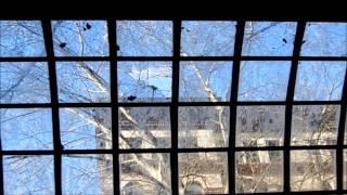 Damaged Pioneer Square Pergola Seattle, Wa